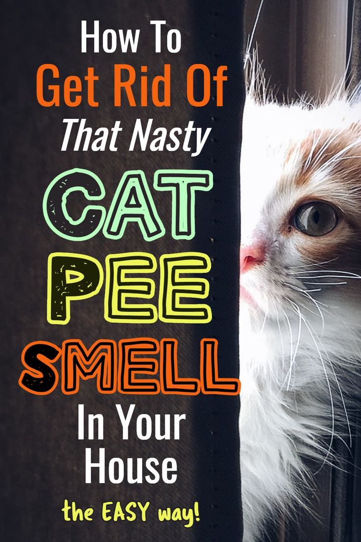 Cat Urine Stink? How To Get Rid Of Cat Pee Smell in 2020