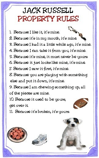 Jack Russell Property Rules