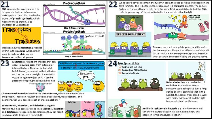Amoeba Sisters Video Recap Alleles And Genes Answer Key ...