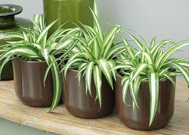 30 plantes dépolluantes* pour améliorer votre intérieur - Bioépuration : Tableau