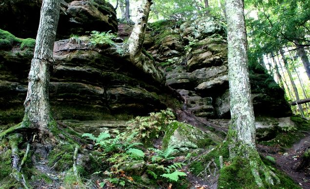 """""""Hiawatha National Forest on the Upper Peninsula of Michigan."""" (From: 29 Bewitching Forest Scenes)"""