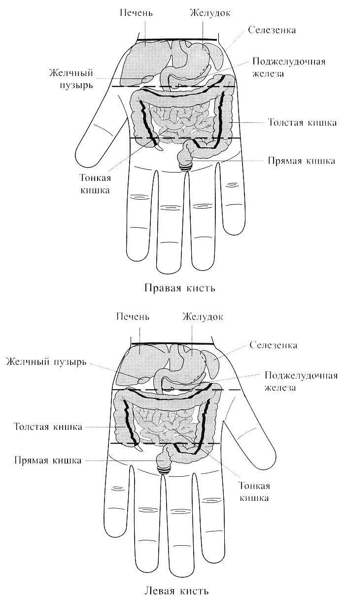 Су Джок. Соответствия органам брюшной полости на кистях