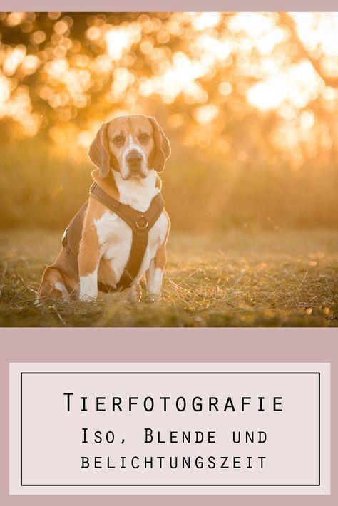 Du möchtest die Bilder deines Hundes verbessern und dich noch mehr mit der Tierfotografie beschäftigen? Dann ist unser Artikel über die manuell Fot…