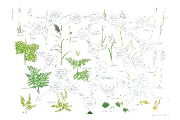 Zoekkaart Grassen,Varens en Mossen