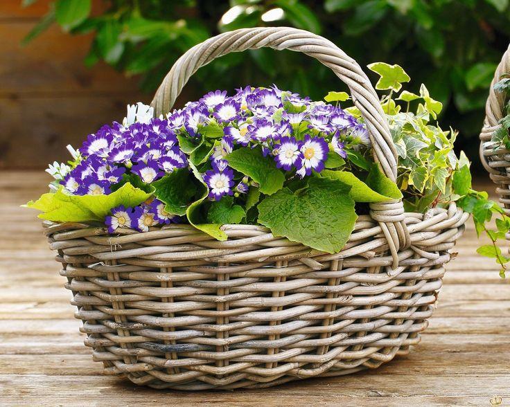 14 besten Pflanzgefäße \ Rankhilfen Bilder auf Pinterest - feng shui gartendeko