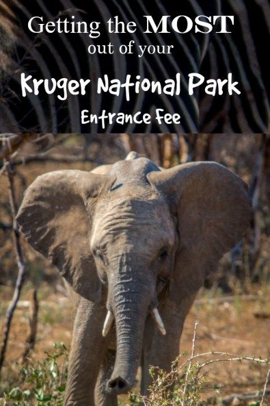 29 best kruger nasionale park images on pinterest kruger nationalgetting the most out of your kruger national park entrance feegetting the most out of your
