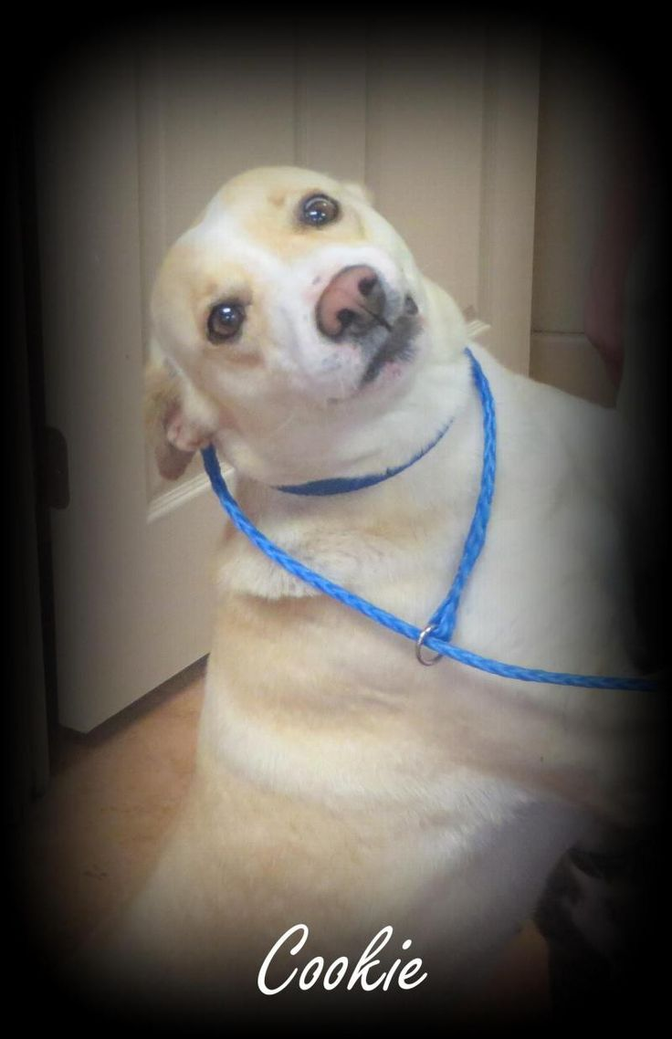 Pet Adoption Events Near Me