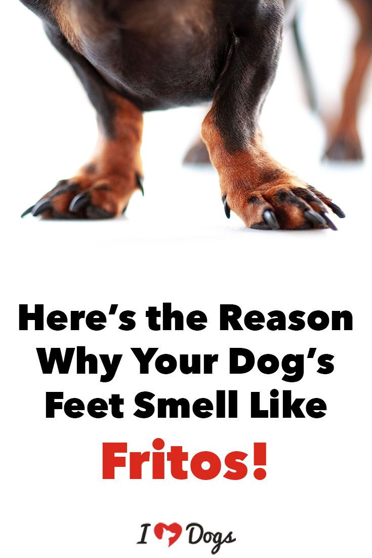 Here S The Reason Why Your Dog S Feet Smell Like Fritos Stinky