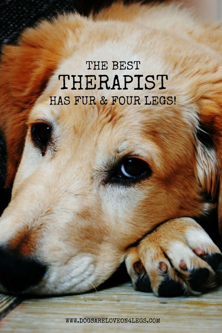 The Best Therapist Has Fur Four Legs Dog Quote Dog Quotes