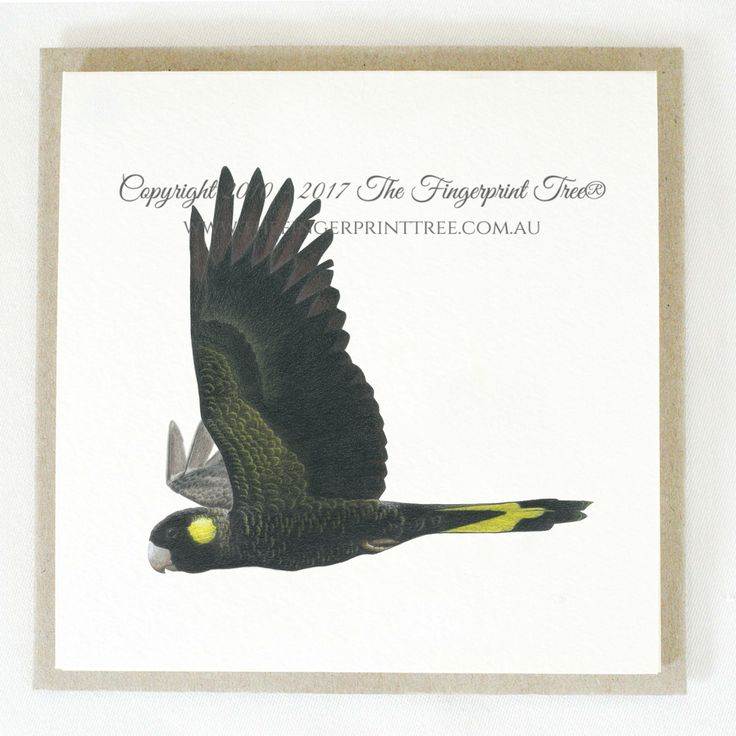 Gift card - Black Cockatoo:  Cards! by The Fingerprint Tree® is our couture range of gift cards featuring illustrations by Ray Carter, Chief Artist & Founder.  Made-to-order and Giclée printed at our Southern Highlands studio.   We sell direct to the public and to retailers.