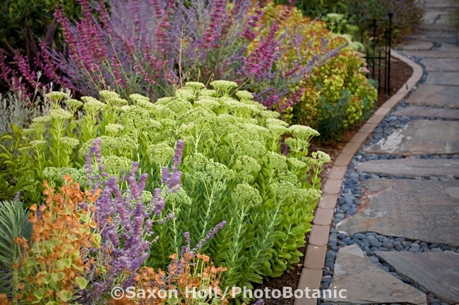 Drought tolerant garden with sedum Autumn Joy, salvias, euphorbias and other perennials. Nice stone and pebble and brick walkway and ironwork. (Saxon Holt Photography, PhotoBotanic Garden Library): Garden Design, Brick, Autumn Joy, Perennial Gardens, Drought Tolerant Garden, Drought Gardens