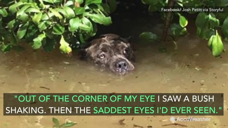 (adsbygoogle = window.adsbygoogle || []).push();       (adsbygoogle = window.adsbygoogle || []).push();   Aug 23, 2016; 6:12 AM ET A man battling his way through the devastating flooding in Baton Rouge, Louisiana, became the unlikely savior of an exhausted mastiff trying to... #Weather #videos