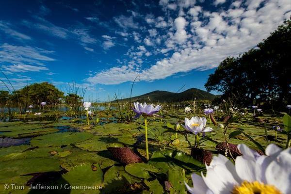Caley Valley Wetlands Surrounding Abbot Point in Queensland