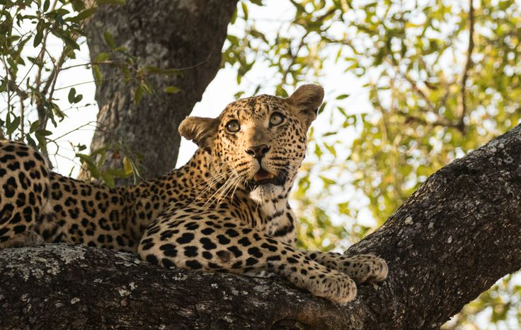 Recent travellers Jim and Deb Mills have just returned from a once-in-a-lifetime East African safari