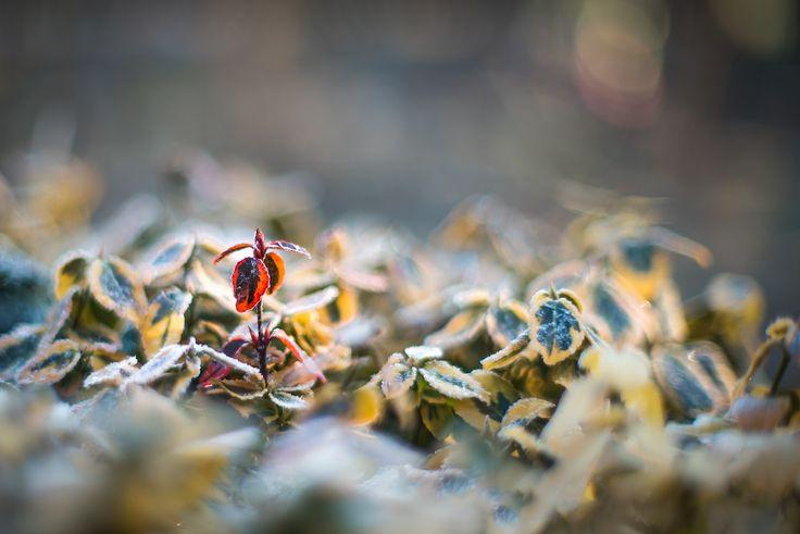 Winter World by PhotonPhotography -Viktor Lakics on 500px