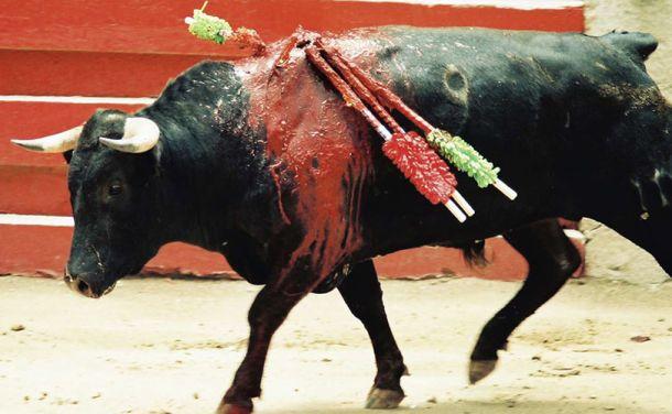 Petition: Ban bullfighting in Spain