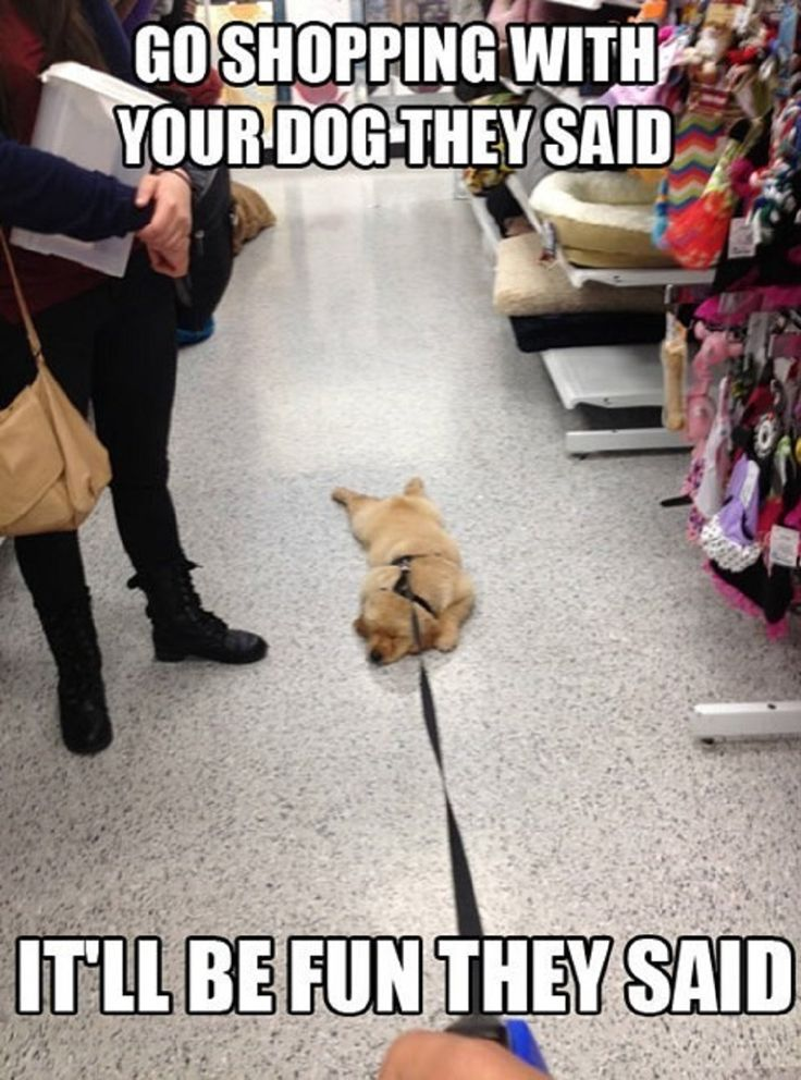 What would happen if I went shopping with my dog.  Either peeing on the ground or this.