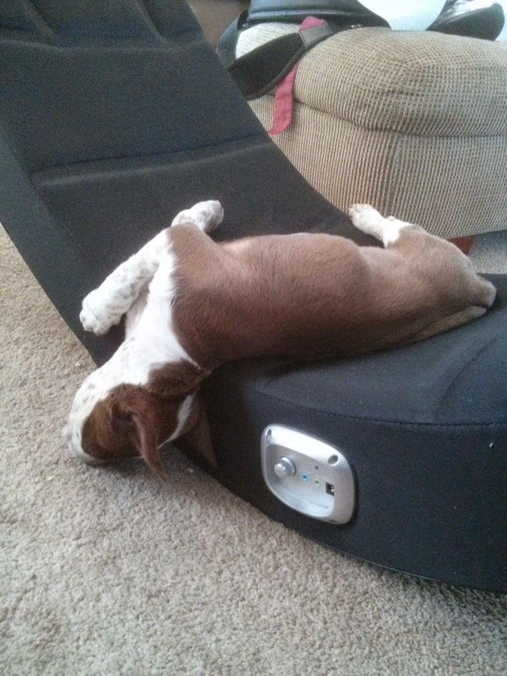 The things you learn from puppies… | Author DelSheree Gladden