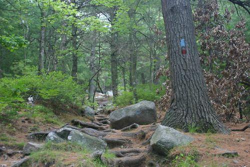 The Skyline Trail climbs quickly up Tucker Hill. #BlueHillsReservation #Milton #Massachusetts #hiking #trail