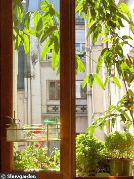 Un écran végétal pour un mini balcon - clématite persistante