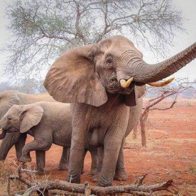 Jižní Afrika total - Exotické poznávací zájezdy - CK SEN