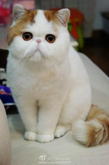 Pet Supplies  Pet Squeak Toys  PrideBites Cat PrideBite