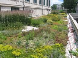 Image result for living roof new zealand