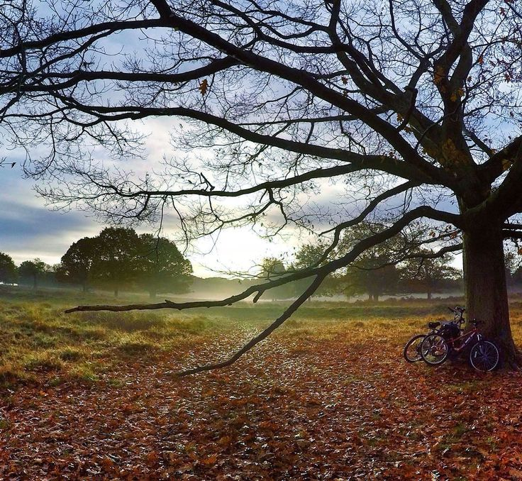 London, Richmond  A magical and relaxing view in beautiful Richmond Park, in a frosty day in February … (photo by @alisinworldland)