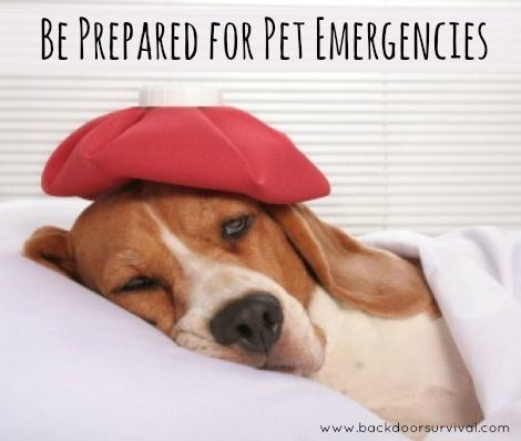 Suggestions and tips to help you be prepared for pet emergencies, including accidents and illnesses that occur following disasters or other catastrophes.