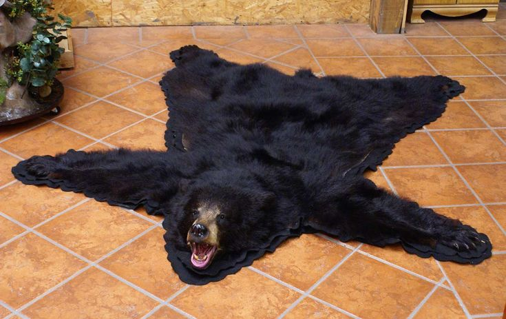 22 Best Images About Animals Bear Skin Rug On Pinterest