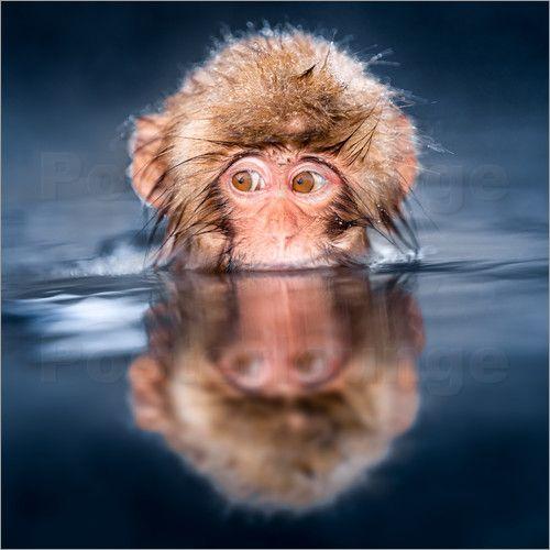 Poster Affenbaby beim Baden