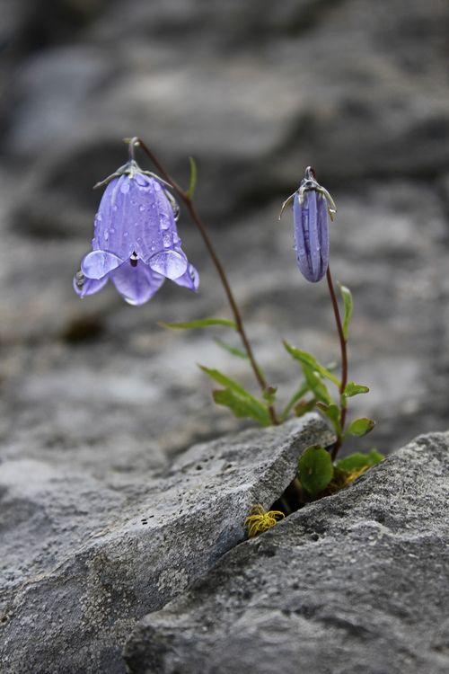 sarah8833:  sarah8833: Nature will always find a way.