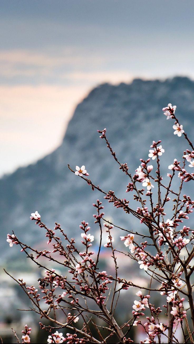 Blüten vor Bergpanorama