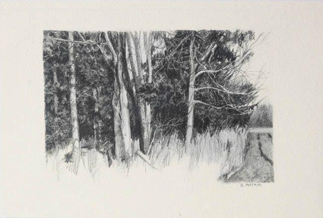 "Denise Antaya - Chestnut Grove Rd 6"" x 4"" Graphite on Arches"