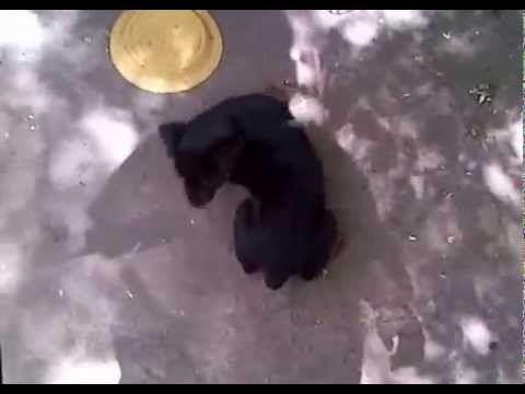 Dog training DIY: Puppy loves biting