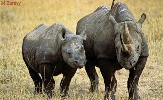 Jídelníček neandrtálce byl různorodý. Jedl nosorožce i houby