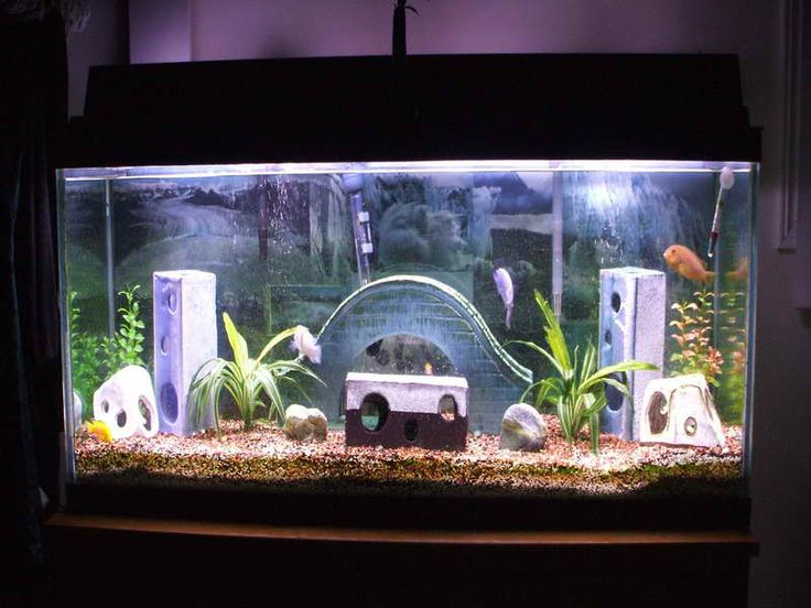 Unique caving aquarium decoration themes home aquarium design pinterest aquarium - Home aquarium designs ...