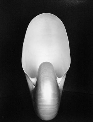 Shell - by Edward Weston; love Edward Weston!