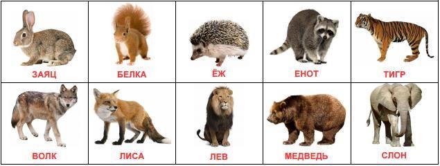 Карточки Домана Дикие животные скачать