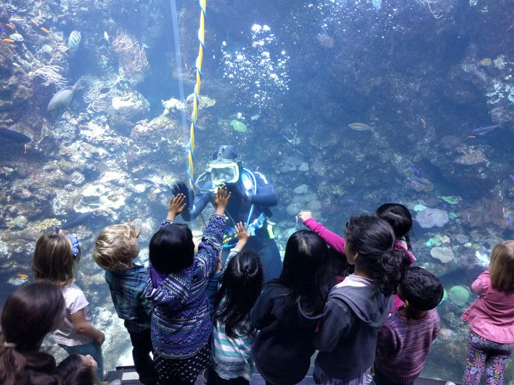 Interacting with the kids is more fun than cleaning algae off the large window for the volunteer divers.