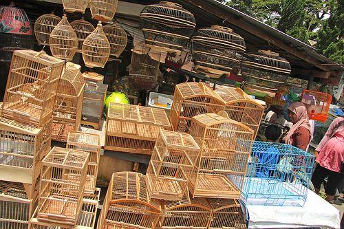 Pasar Burung - Malang (Java - Indonesia)