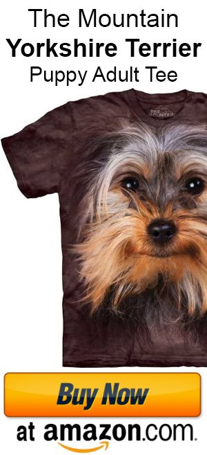 Buying a Yorkie Terrier Mix from a Responsible Breeder