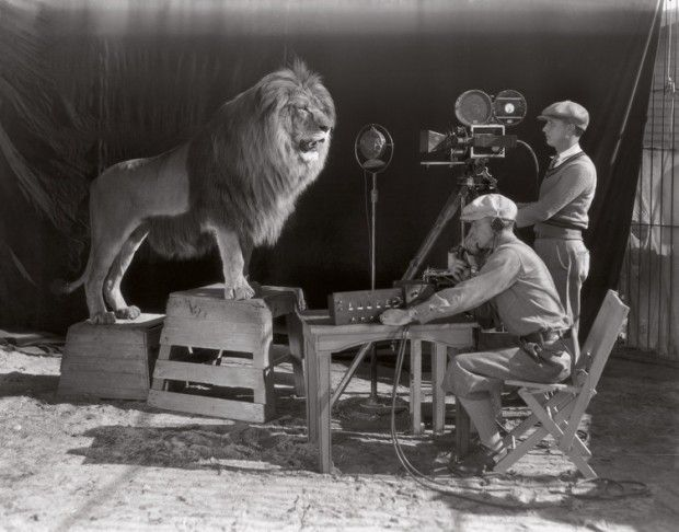 The MGM lion getting a photo session.