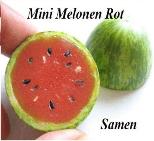 15x-Mini-Melonen-Samen-Hingucker-Obst-Pflanze-Raritaet-essbar-lecker