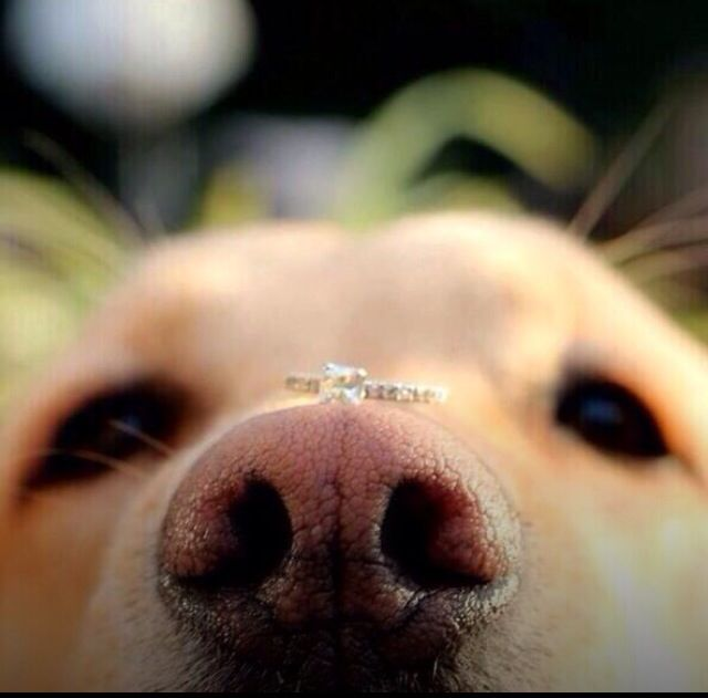 Dog Wedding, Dog Proposal, Cute Ways To Propose