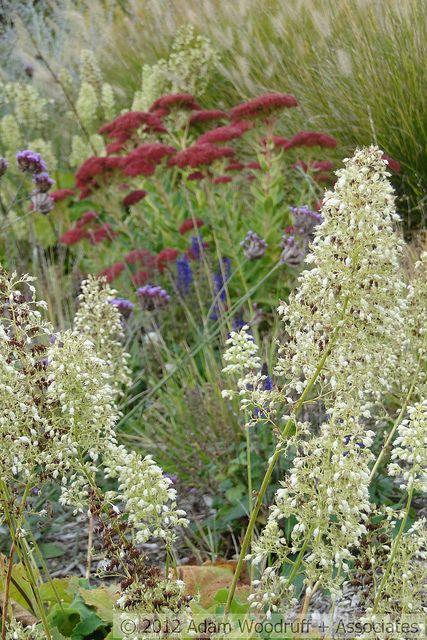 Great colour combination - love the burgundy Yarrow - could be Summer Wine (Achillea millefolium) 091 by Adam Woodruff, via Flickr