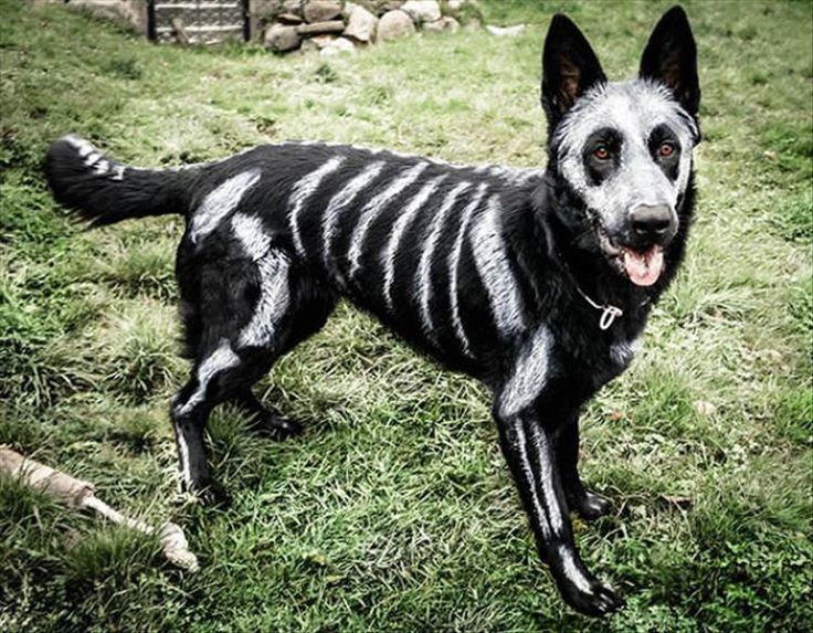 the best halloween costume ideas for your dogs 23 pics