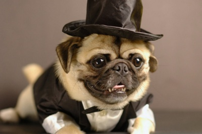 :')God, Dogs, Pets, Chicago, Puggies, Handsome Man, Pugs Life, Animal, Tops Hats