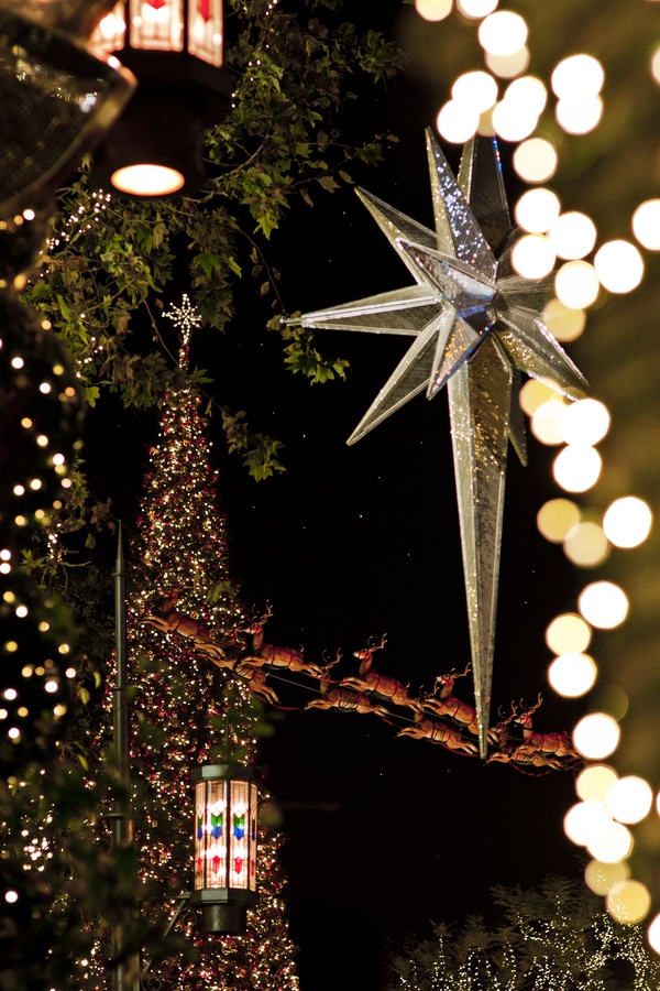 117 best Holiday Lights images on Pinterest  Holiday lights