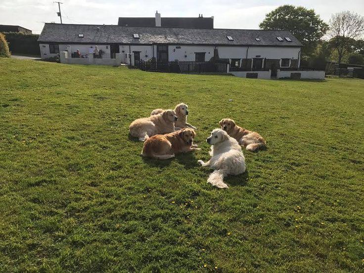 Dogs Paradise, Newton Tracey, Barnstaple, Devon. England. UK. Pet Friendly. Dog Friendly. Holiday. Travel. Stay. Self Catering.  Explore. Outdoors. Beach. Coast.